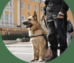 Dog Security for PAS 128 Utility Surveys